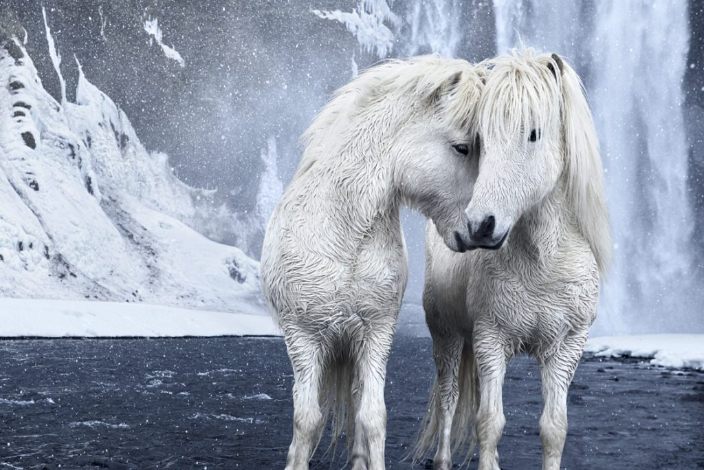 Photographer Captures Fairytale-Like Icelandic horses Who Roam Iceland's Epic Landscape