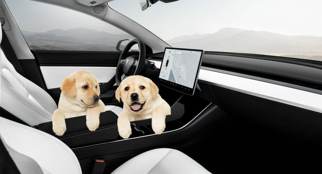 Tesla introduces 'Dog Mode' to keep pets cool inside the car