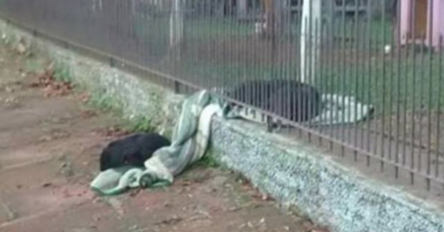 Puppy  Shares Her New Blanket With A Cold Homeless Dog