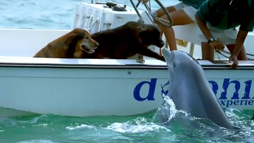 Playful dolphin jumps out of water to kiss a dog