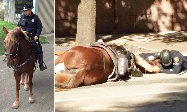 police officer Comforts Fallen Horse Partner During Her Final Moments of Life