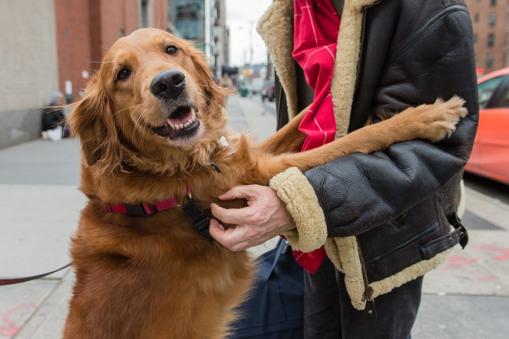 NYC Dog Stands On The Street Corner To Give Hugs To Strangers
