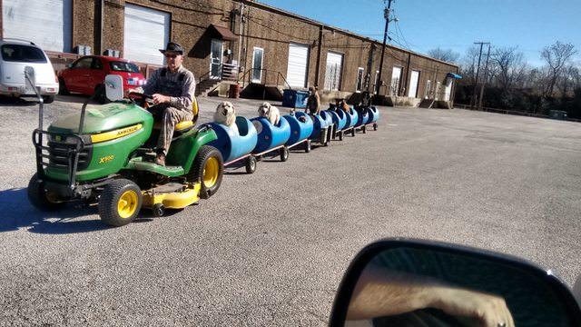 Texas man Takes Rescue Dogs On 'Dog Train' Rides To Brighten Their Days