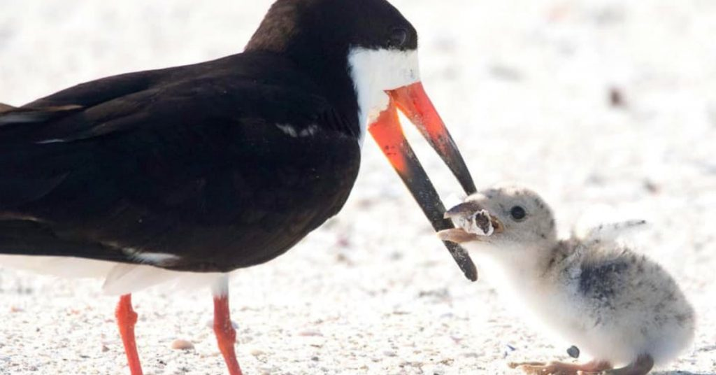 Heartbreaking Photo Shows Mother Bird Feeding Cigarette Butt To Chick