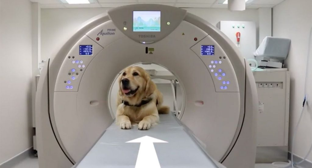 Therapy dogs show sick kids how to go through medical procedures