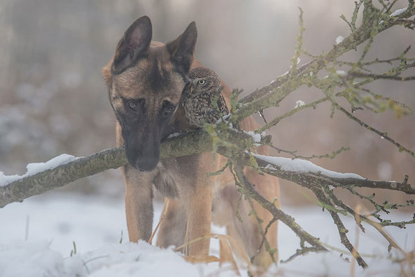 These Photos show the incredible friendship between a dog and  an owl