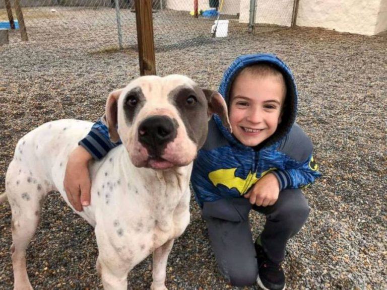 7 Year Old Named 'Kid Of The Year' After Rescuing More Than 1,300 Dogs