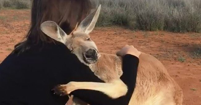 Rescued Kangaroo Can't Stop Hugging The Volunteers Who Saved Her Life