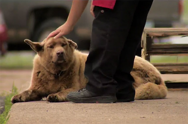Meet Bruno, the dog who walks 4 miles every day just to say hi to everyone in town