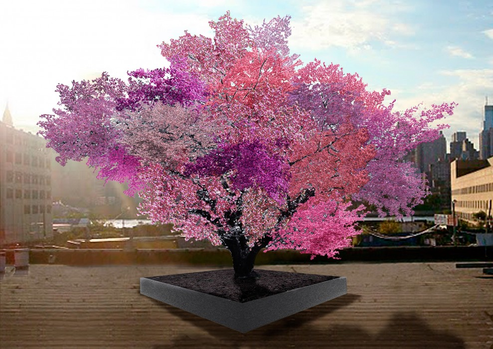 This magical tree produces 40 different kinds of stone fruit
