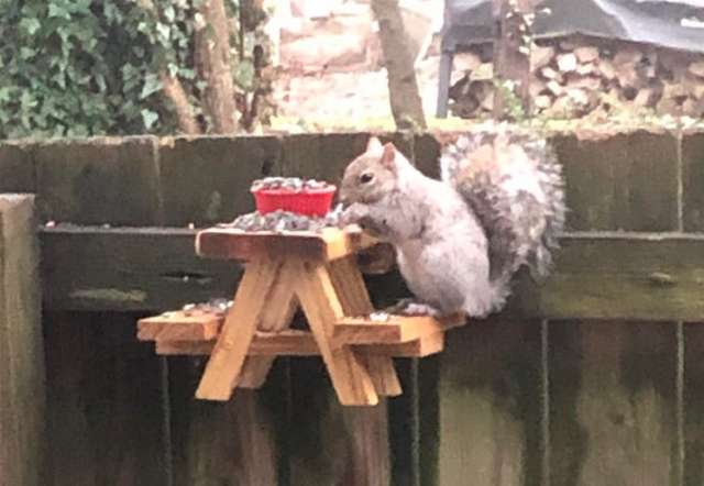Man Builds a Tiny Picnic Table For The Squirrel Visitors In His Yard
