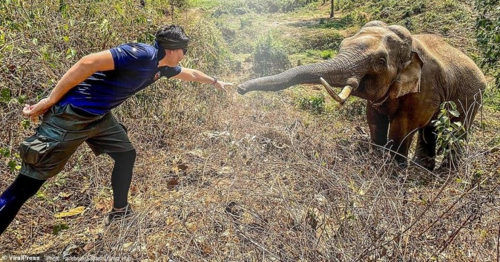 Elephant In Thailand Recognizes Vet Who Saved His Life 12 Years Ago