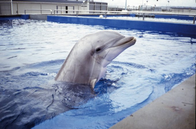MEXICO CITY BANS DOLPHINARIUMS