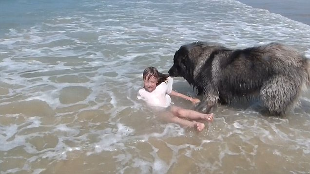 Dog rescues girl in the sea after thinking she's being washed away