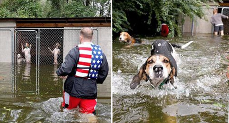 Hero saves six dogs abandoned in a LOCKED cage in flooded kennels (video)