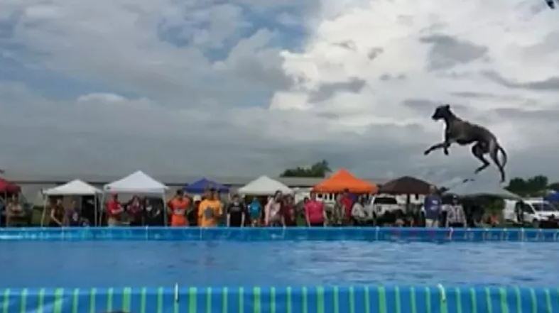 MICHIGAN DOG SETS WORLD RECORD FOR DOCK DIVING!