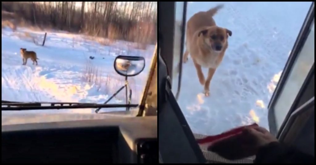 Bus Driver Makes A Secret Stop Every Day Just To Feed Hungry Stray Dog Who Waits For Her