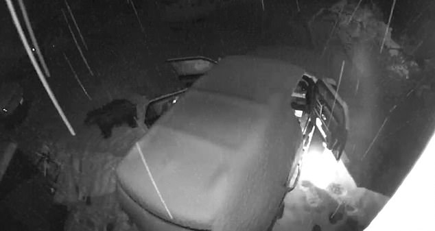 Clever bear carefully opens snow-covered van doors and leaves them open during winter storm