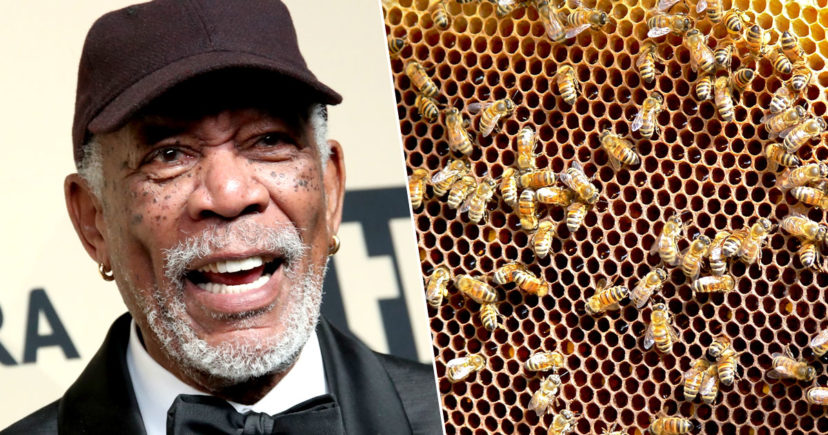 Morgan Freeman Converts His Ranch Into Honey Bee Sanctuary To Save The Bees