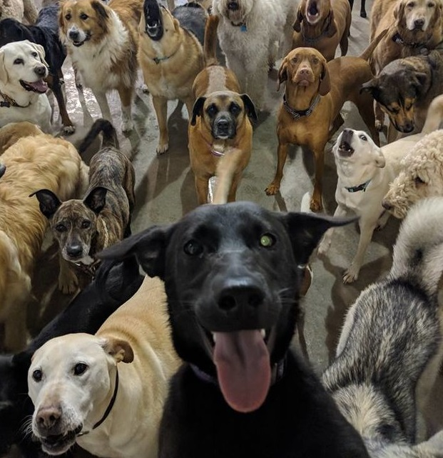 Pack of dogs posed for a photo — looks like it was taken by a dog with a selfie stick